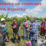 7 - Putovanie, vinohrady